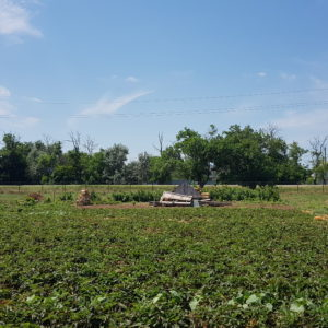 Земельный участок 6 соток в Седом Азове